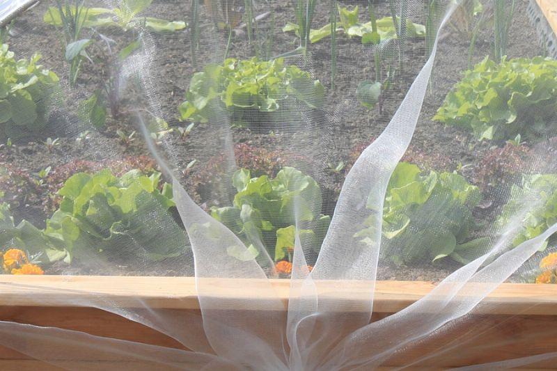 Gemüseschutznetz für Hochbeet Aufsatz Single